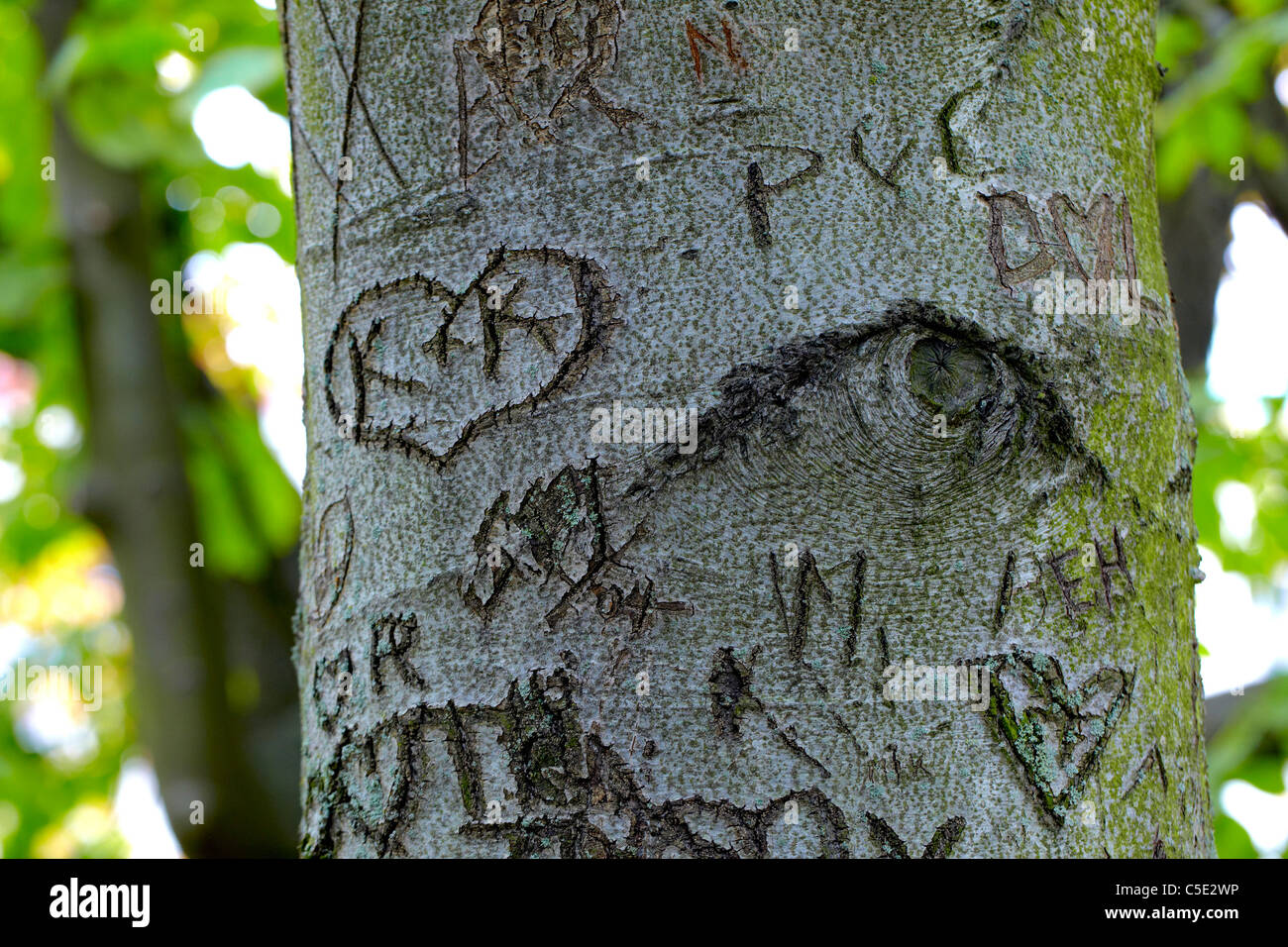Close-up of love expressions on the tree trunk - Stock Image