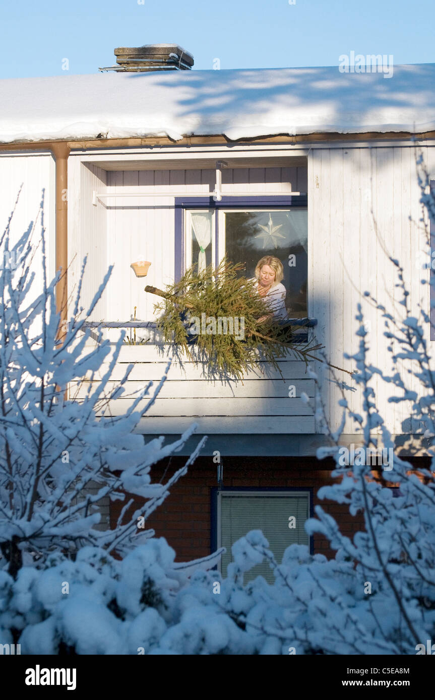 Woman discarding the Christmas tree at home with frosted branches in foreground - Stock Image