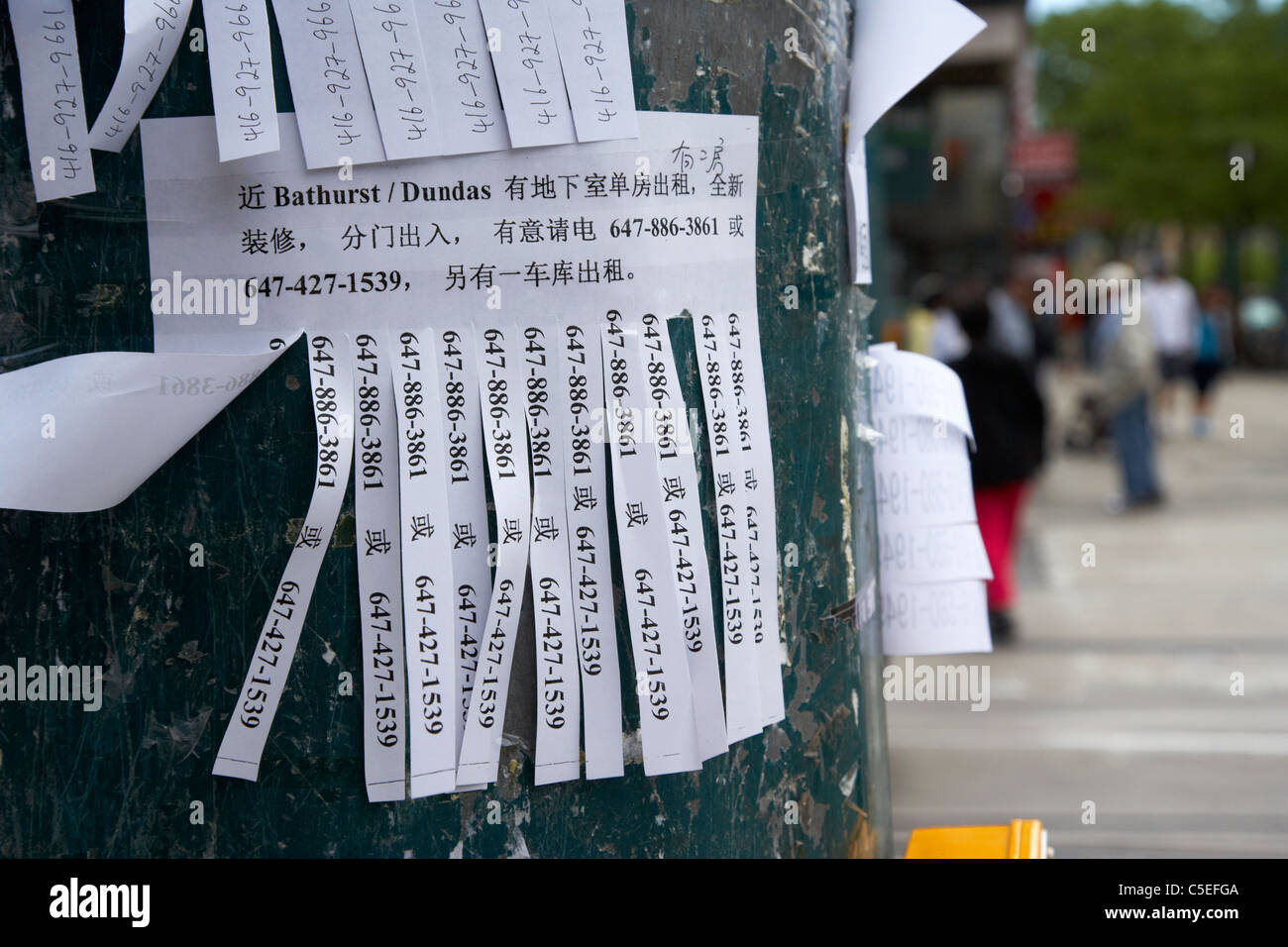 bilingual tear off advertising strips on lamppost in chinatown toronto ontario canada - Stock Image