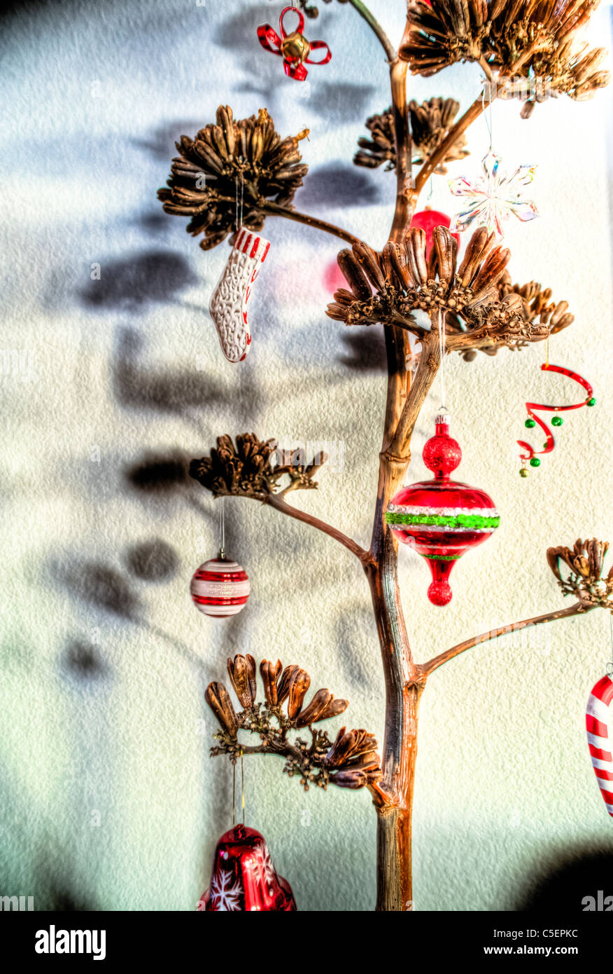 a dried agave century plant with christmas ornaments stock image