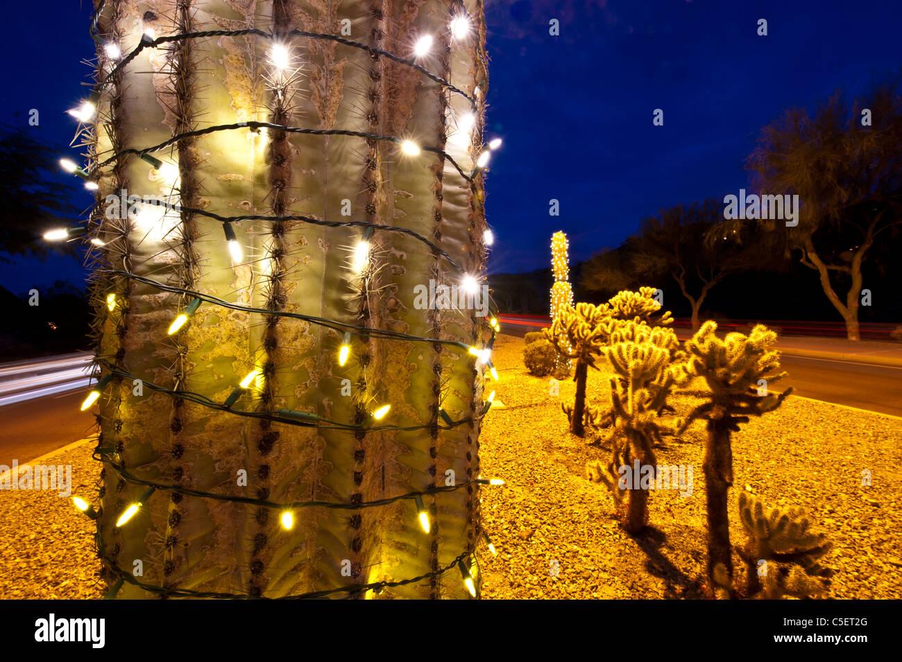Christmas Lights On Saguaro Cactus Stock Photos & Christmas Lights ...