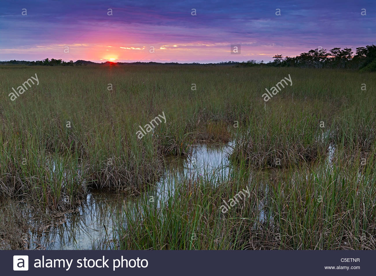 The sun rises over the Florida Everglades, known as the 'river of grass.' - Stock Image