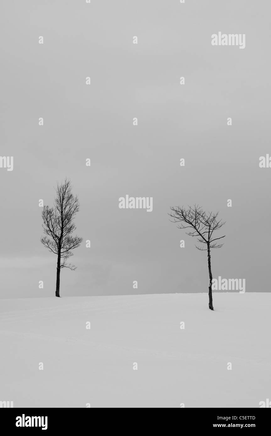 Two bare trees in a snow covered field - Stock Image