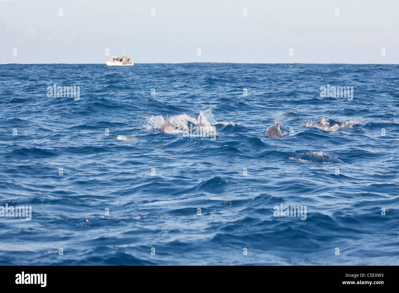 Ecotourists dolphin watching off Sao Miguel island in the Azores - Stock Image