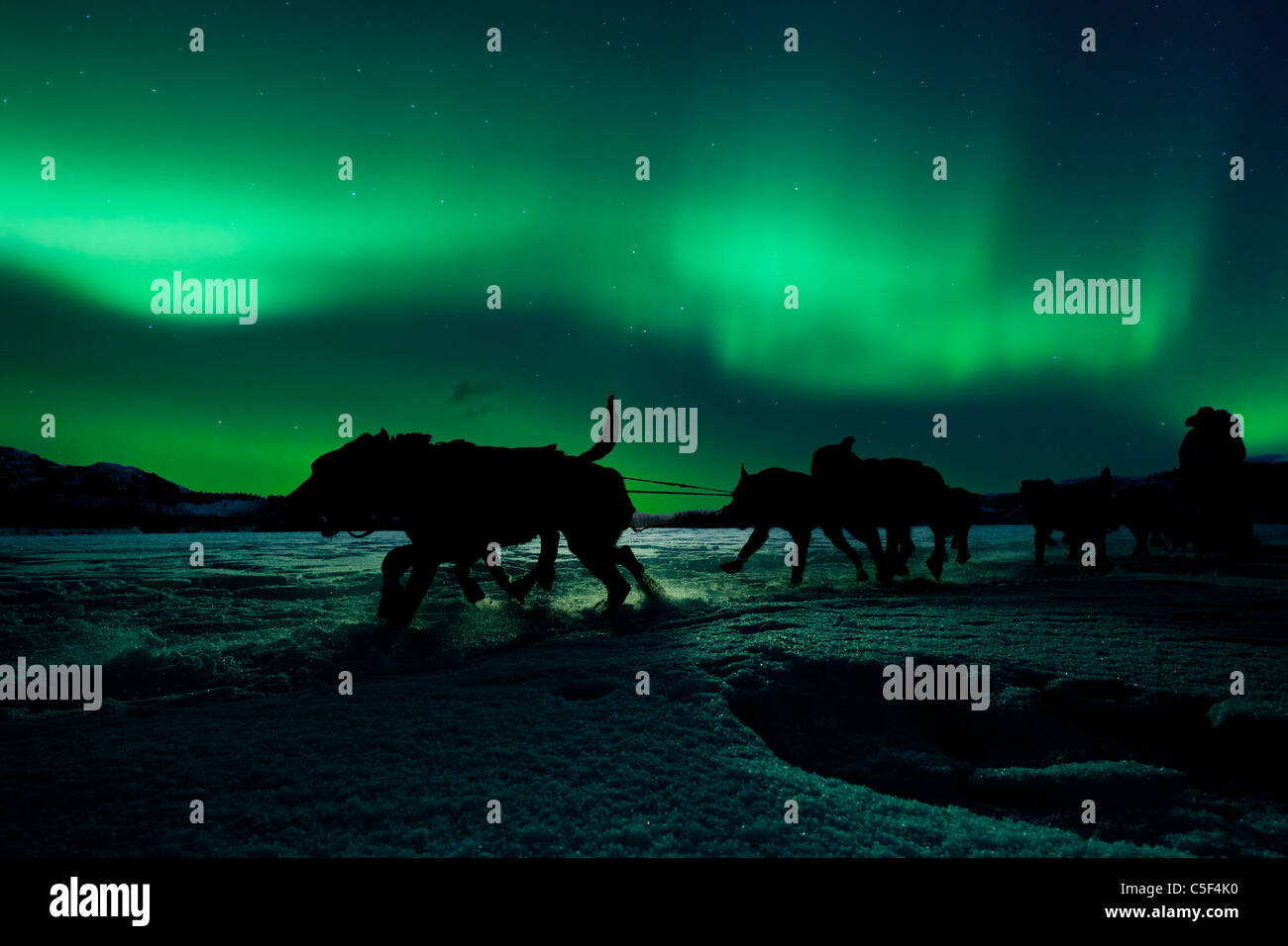 Silhouette of sled dog team pulling sleigh with musher under the northern lights. - Stock Image