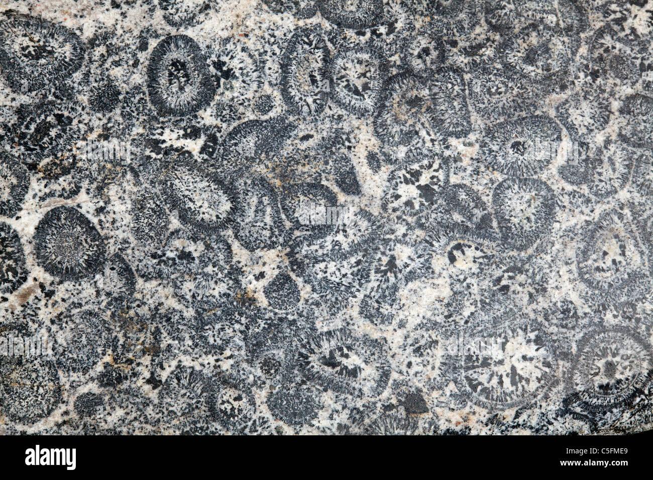 orbicular granite - Stock Image
