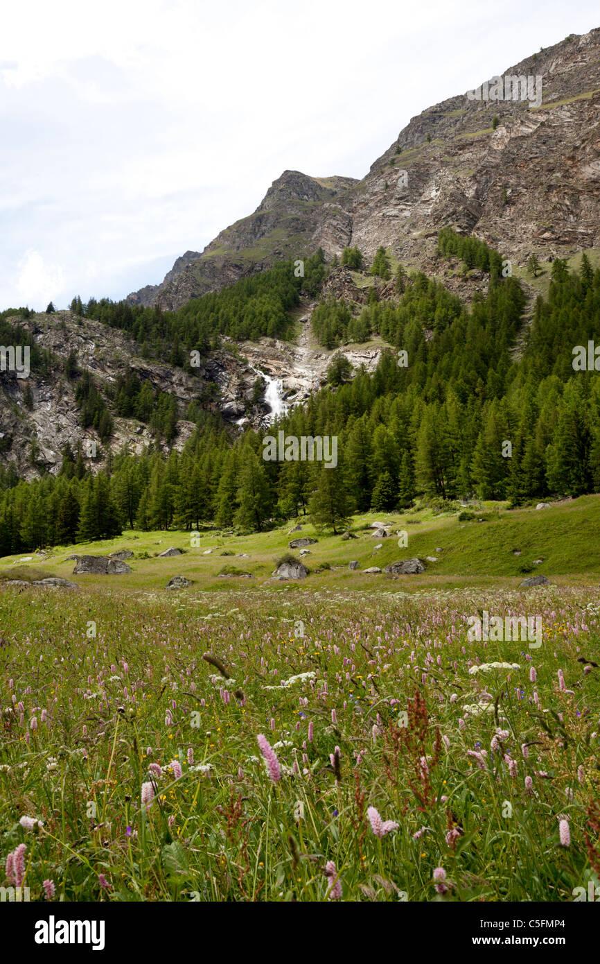 In June, an alpine pasture in the Aosta valley (Italy). La prairie alpine en Juin dans le Val d'Aoste (Italie). Stock Photo