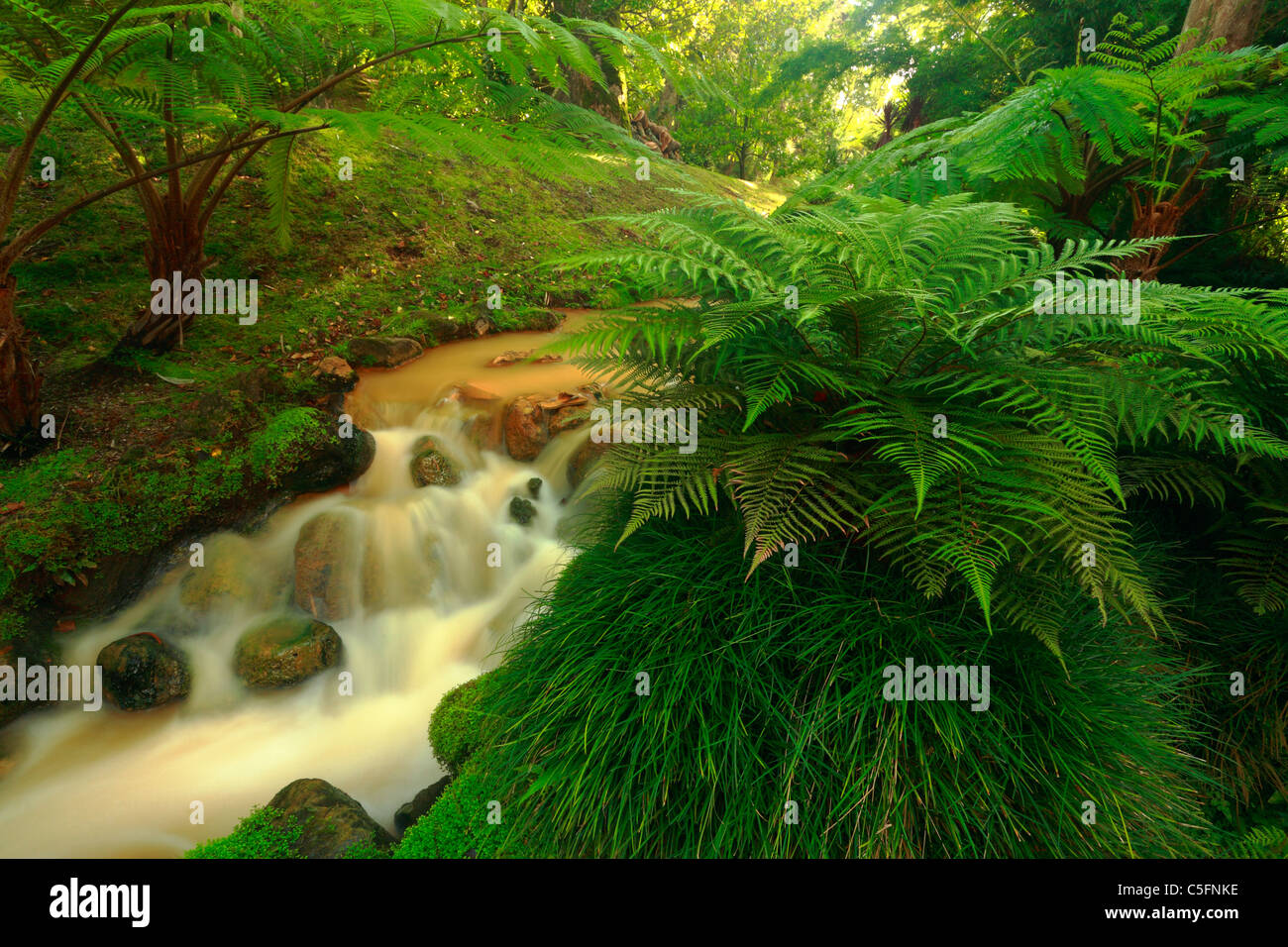 Stream of thermal ferrous waters and lush green vegetation in Terra Nostra Park. Furnas, Sao Miguel island, Azores, - Stock Image