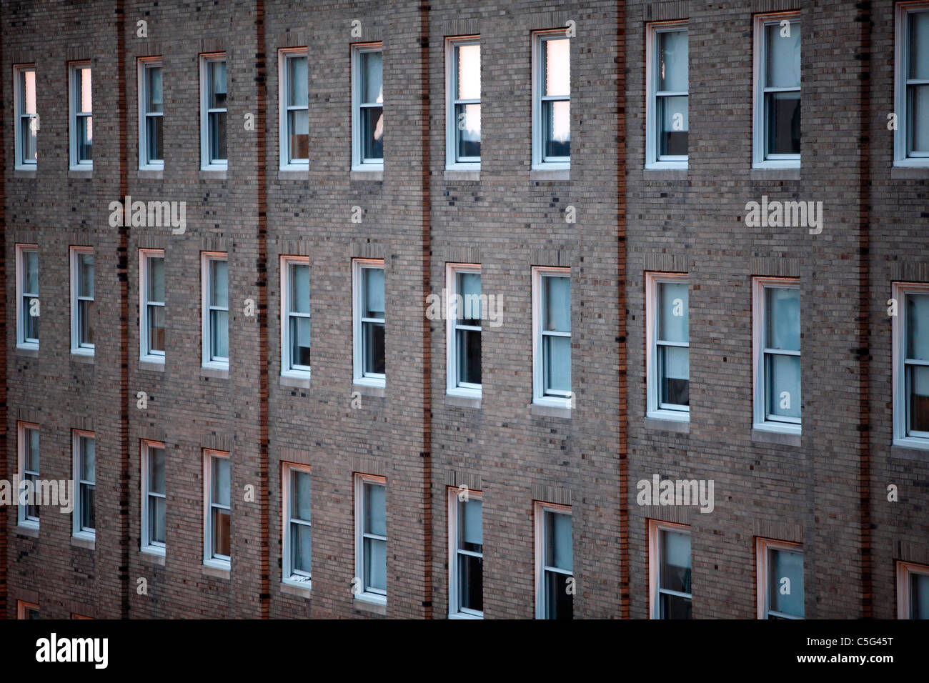 Rows of windows multi story building - Stock Image