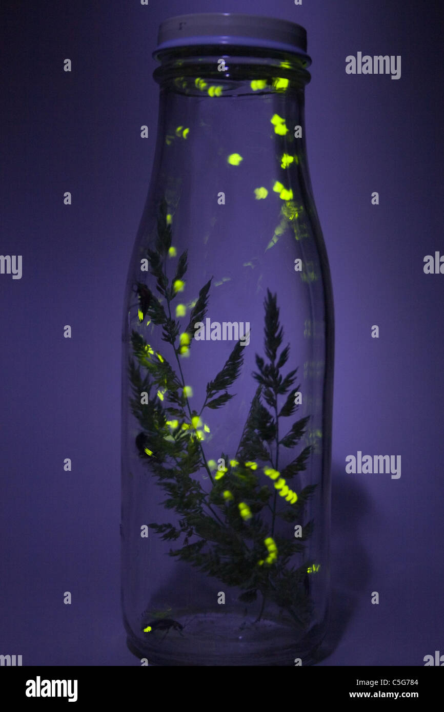 Fireflies Flashing in Jar - Time Exposure - Stock Image