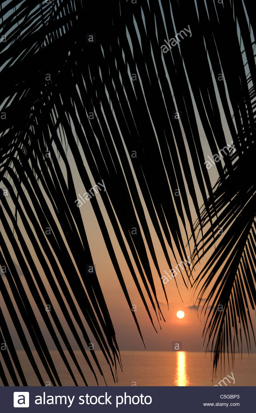 Sunset through Palm fronds Maldives Stock Photo
