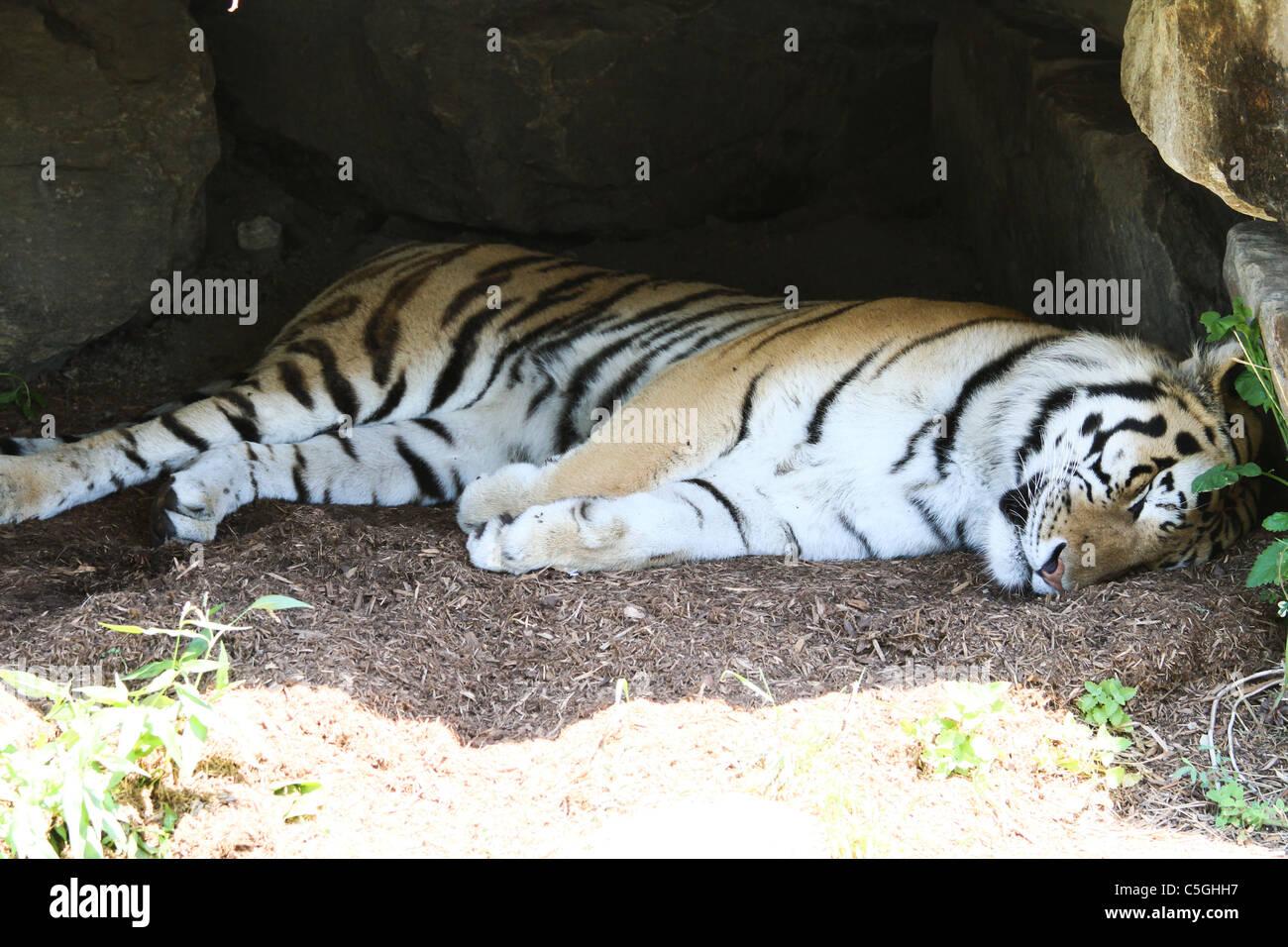sleeping tiger cave - Stock Image