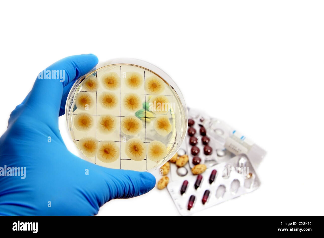 arm in glove with fungi on the plate and medicins on the background - Stock Image