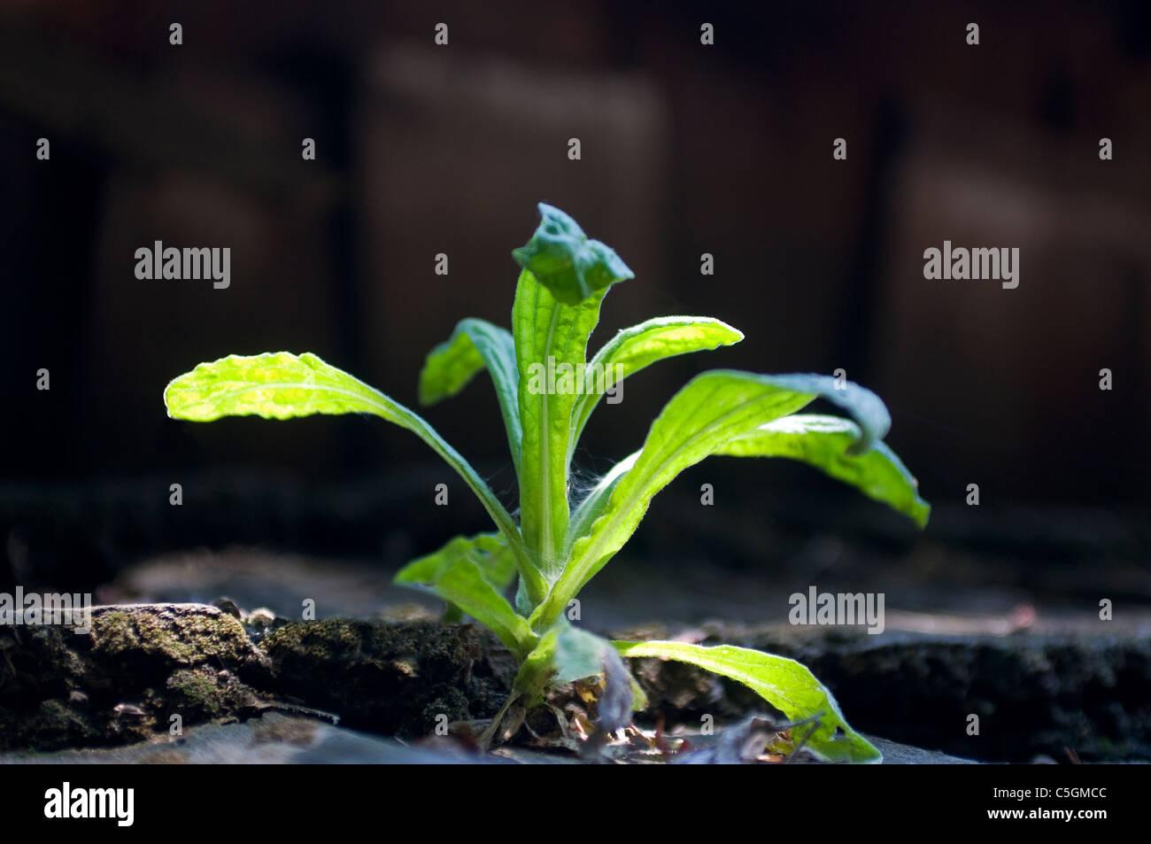 Plant seedling - Stock Image