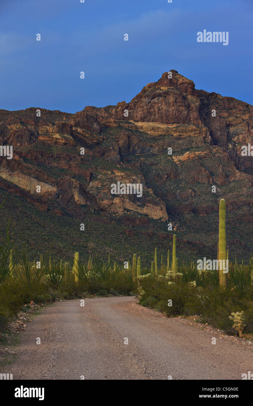 Ajo Mountain Drive, gravel road leading towards the Ajo Range Mountains at twilight in Organ Pipe National Monument, - Stock Image