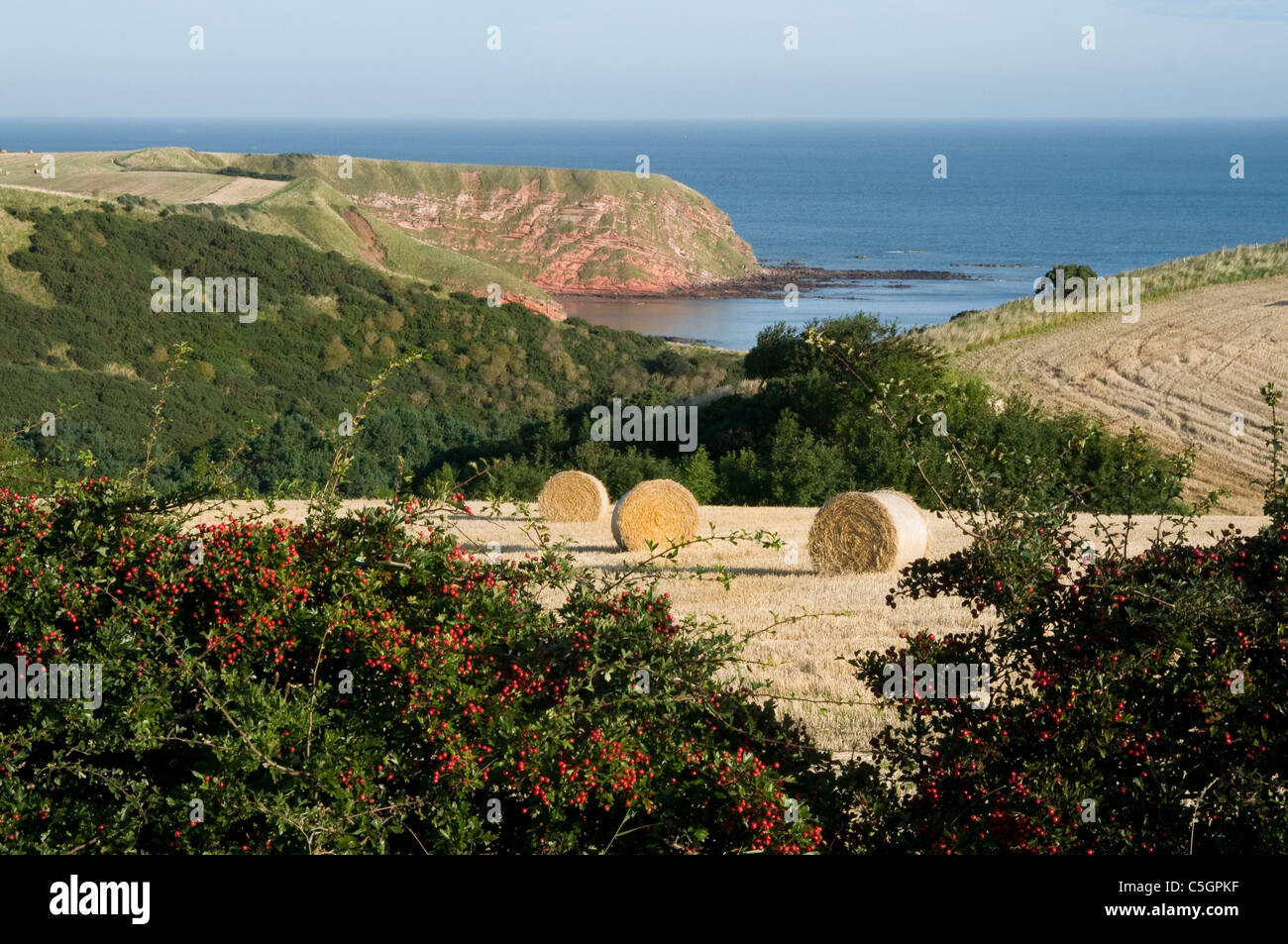 Coastal farmland with haybales hedgerows and cliffs near St Abbs - Stock Image