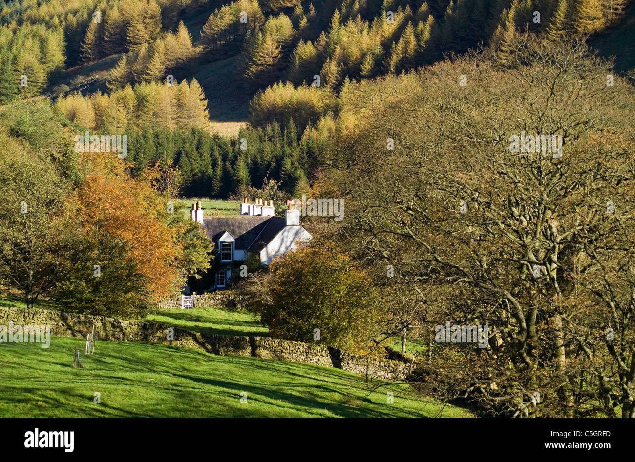 Cottage secluded in hills and woods moffat water - Stock Image