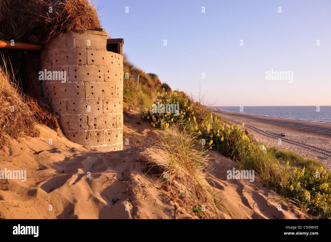 eroding marram dune at Hemsby Norfolk UK - Stock Image
