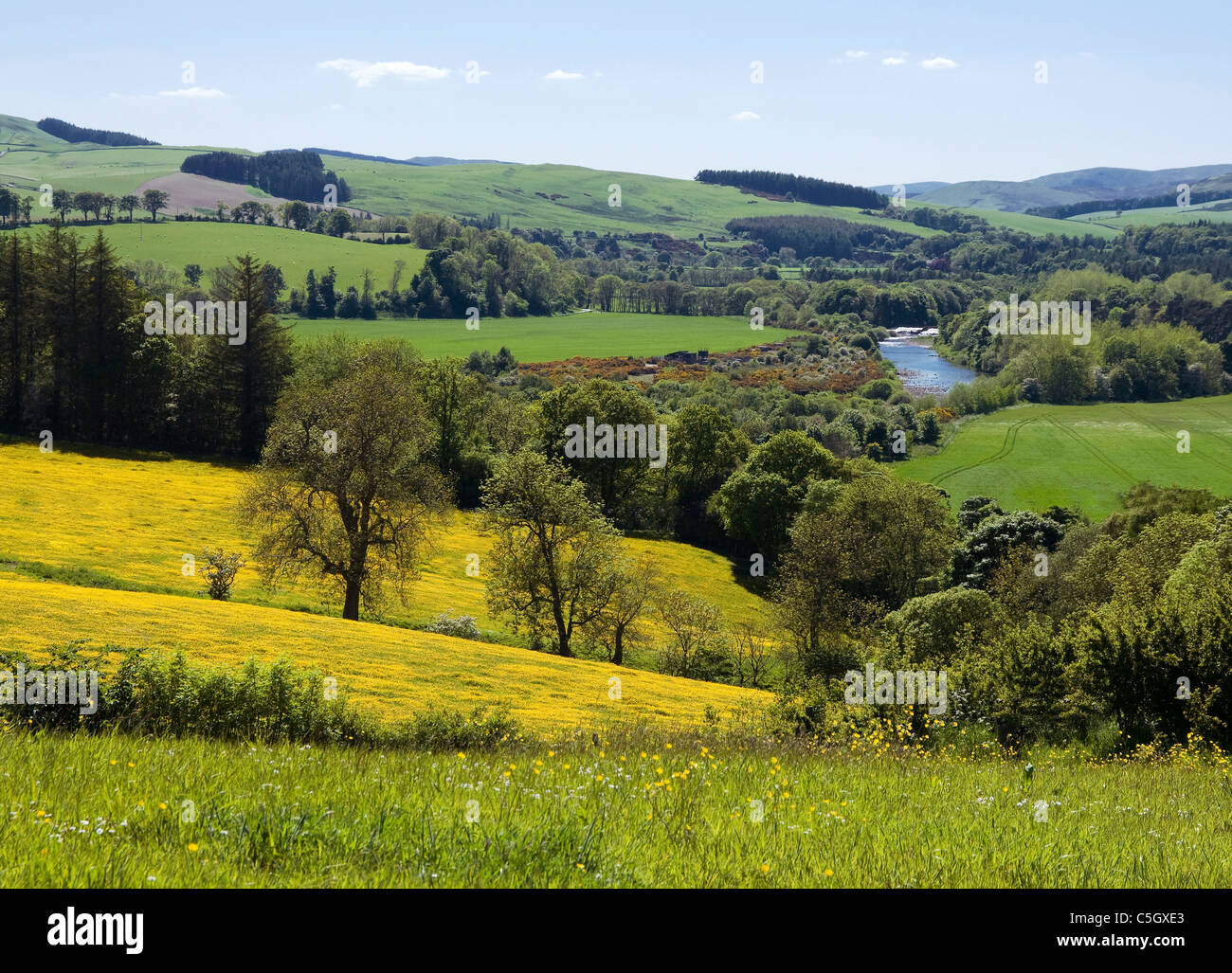 Farmland with buttercups mixed woodland and River Yarrow near Selkirk - Scottish Borders - Stock Image