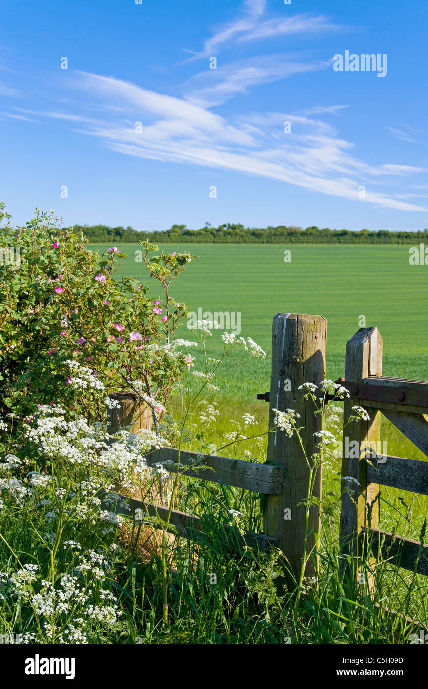 Hedge and gate with field and wild flowers near Coldstraem - Stock Image