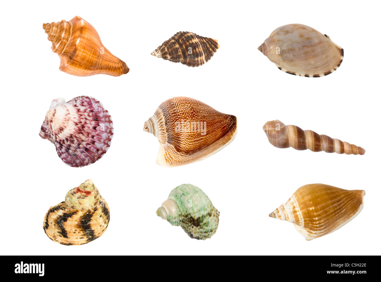 A montage of colorful seashells each with its own clipping path for use on white backgrounds. - Stock Image