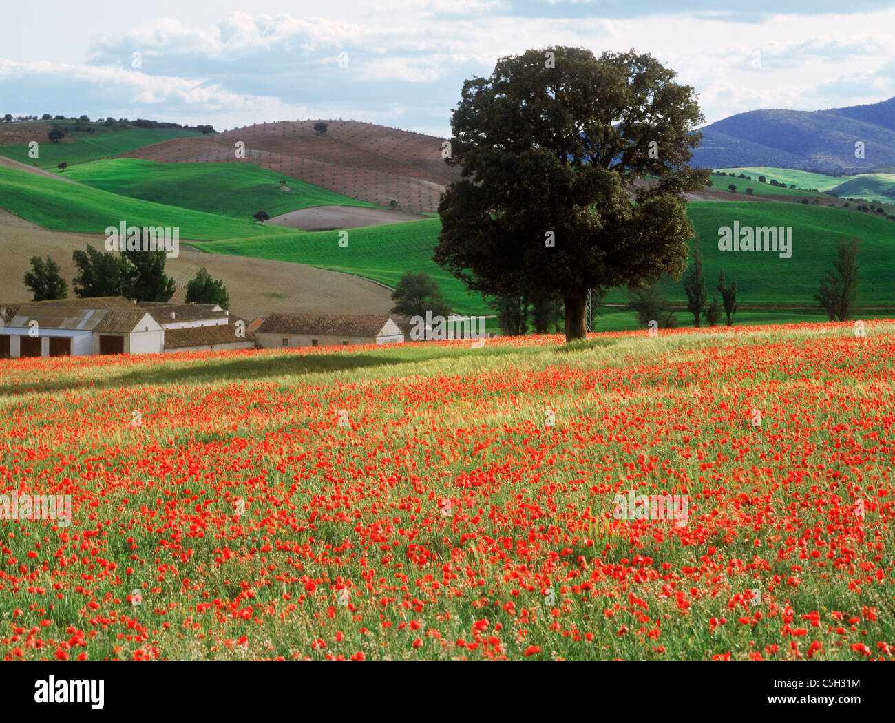Fields of wildflowers in spring around La Mancha in Castilla, Spain.  Most sparsely populated of Spain's autonomous - Stock Image