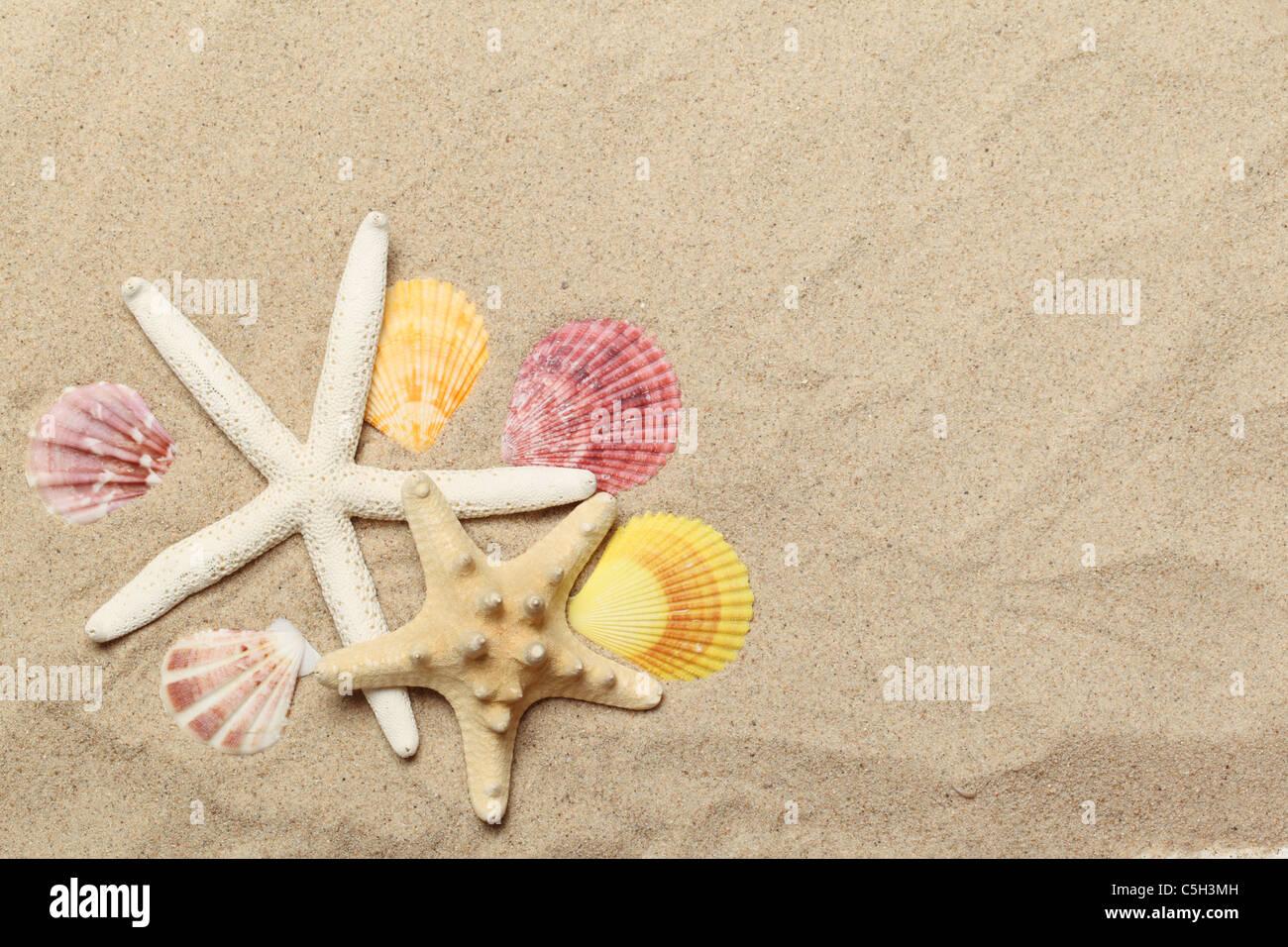 Seashells collection on sand background - Stock Image
