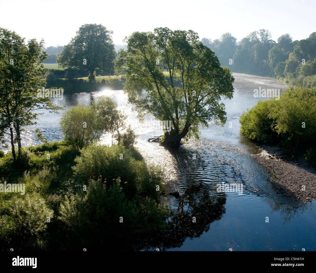 River Tweed and trees in sunlight by Kelso - Stock Image