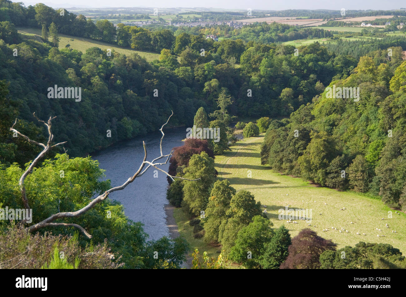 River Tweed by Scotts View - Stock Image