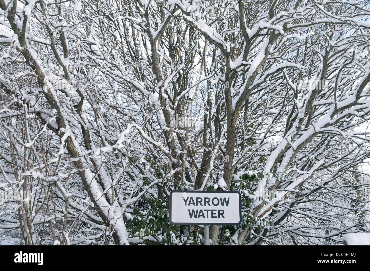 Sign for Yarrow Water in thickly covered snowy branches - Stock Image