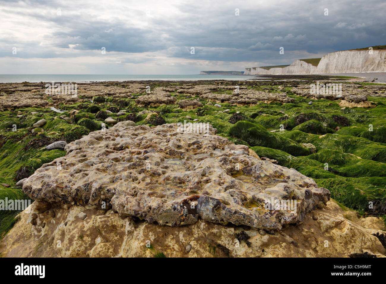 Birling Gap at low tide showing a layer of hard flint stone with the softer eroded chalk layer underneath. - Stock Image