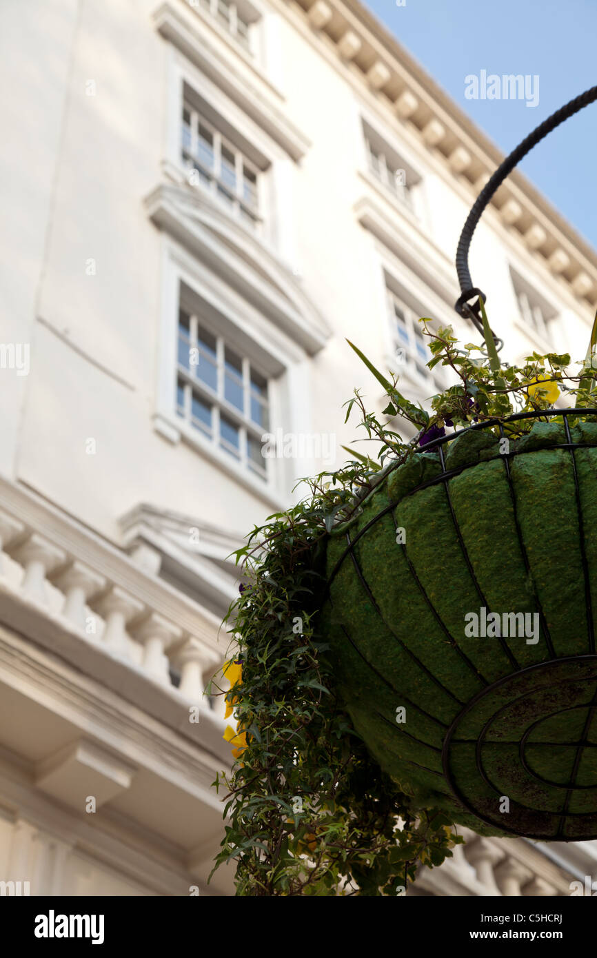 Basket of flowers and Georgian houses - Stock Image