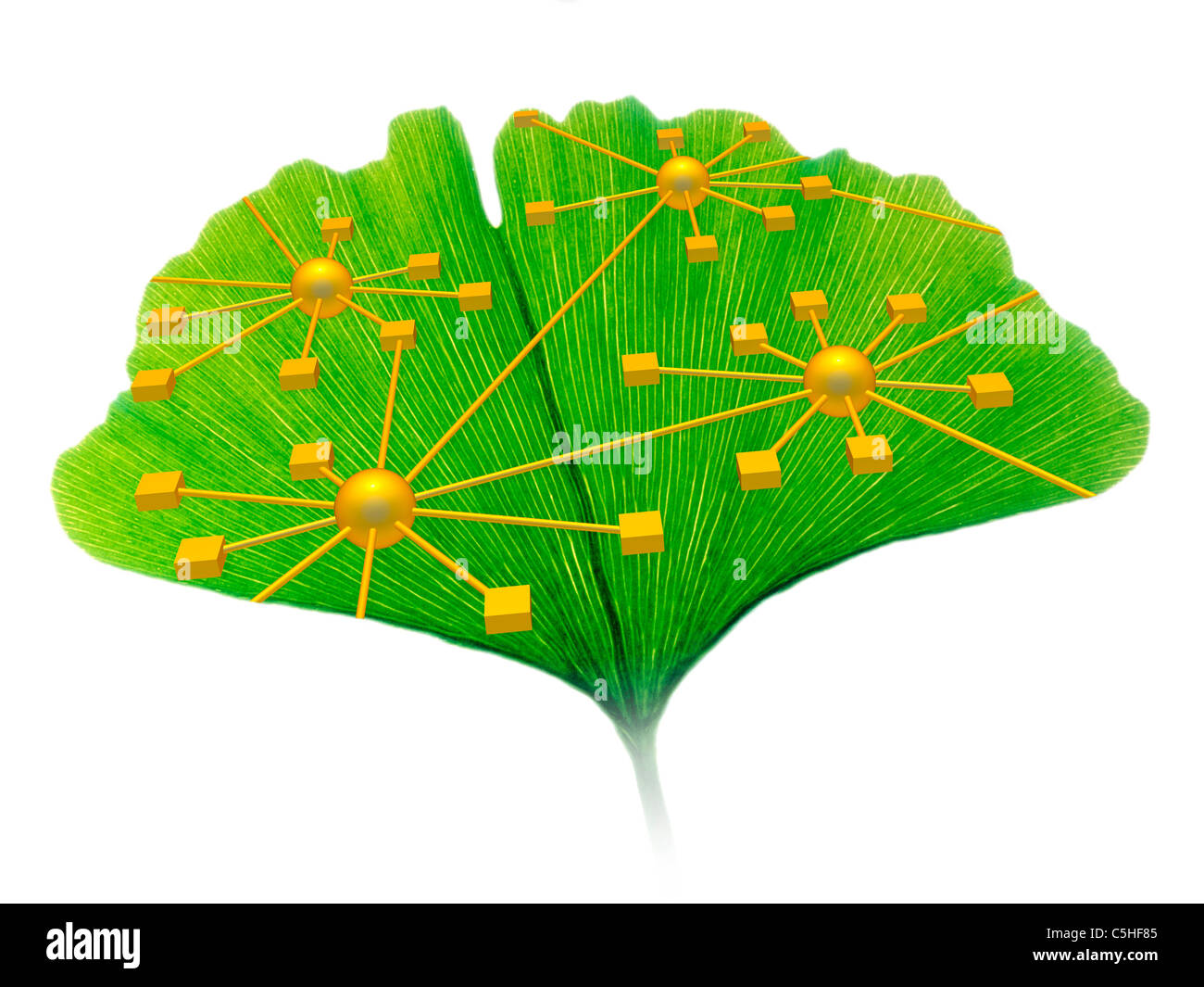 Ginkgo and network diagram - Stock Image