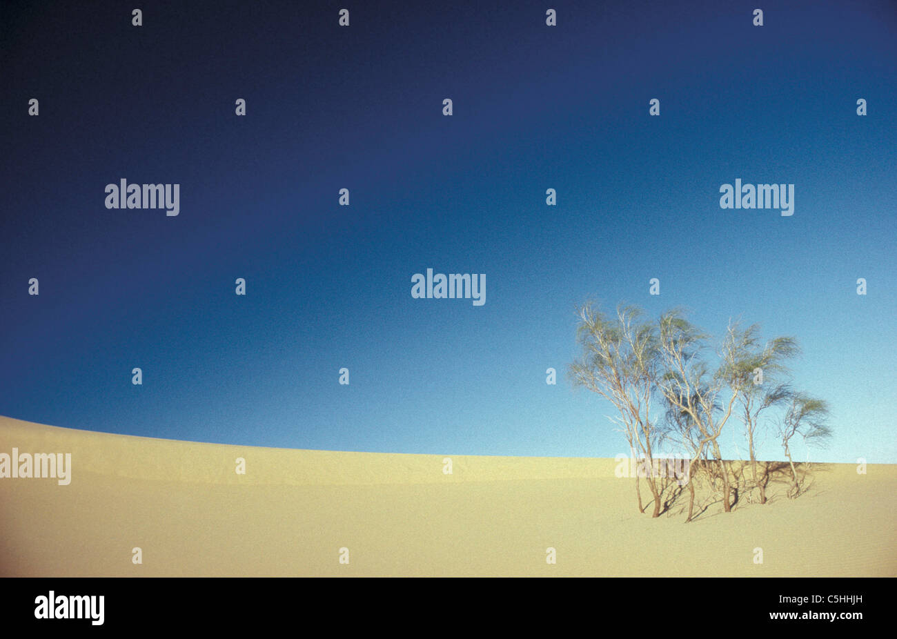 Algeria. Deb Deb. Sahara desert. Bushes on sanddunes. Stock Photo