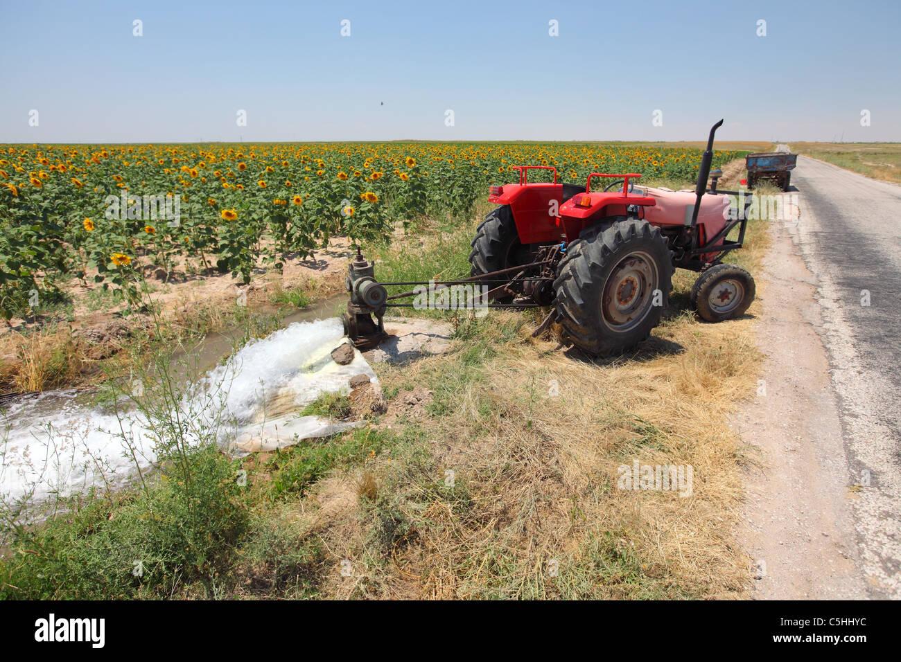 Turkey, Central Anatolia, sunflowers, sunflower, field, irrigation - Stock Image