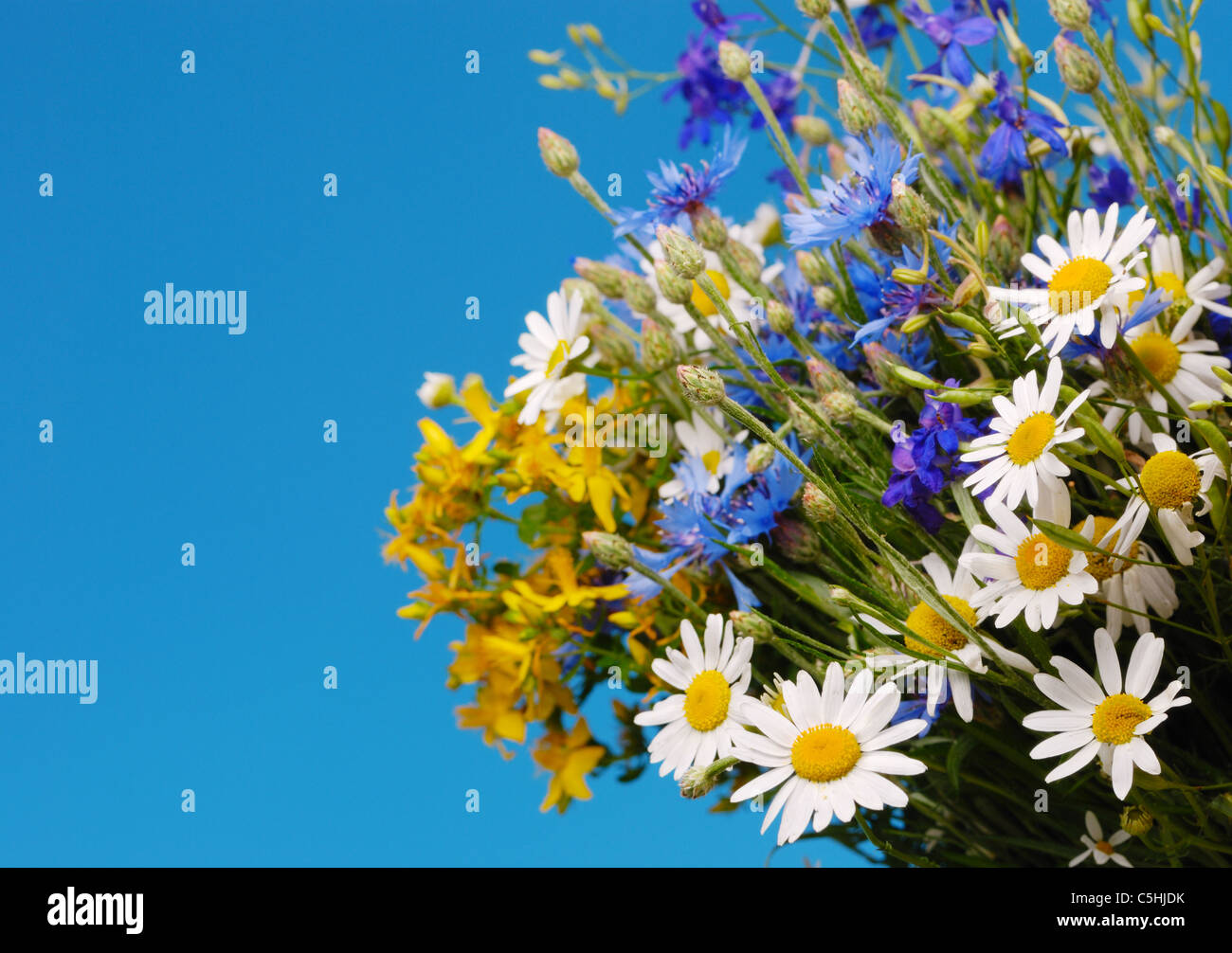 Fresh Field Flowers Bouquet On The Blue Background Stock Photo Alamy