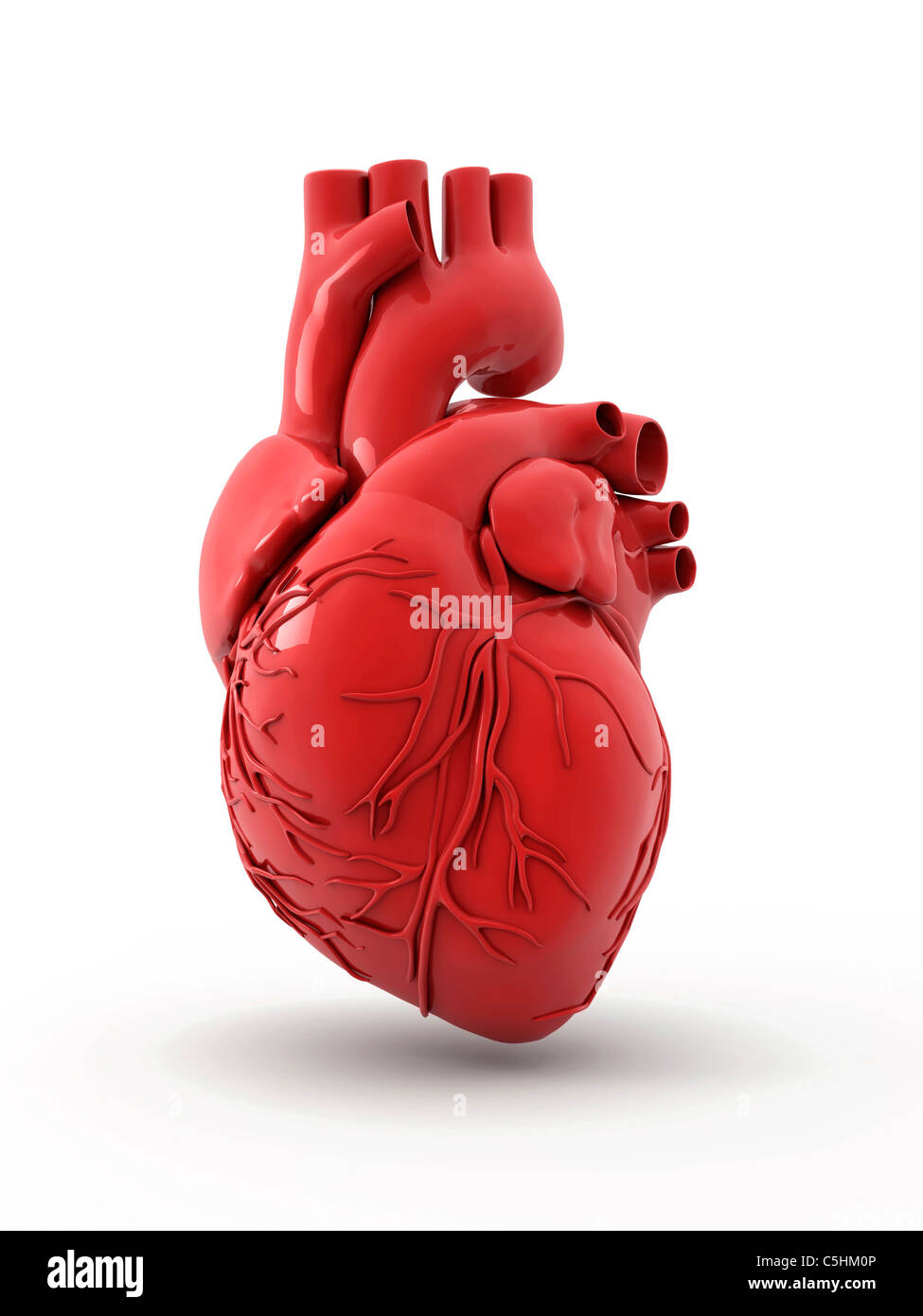 Heart with coronary vessels - Stock Image
