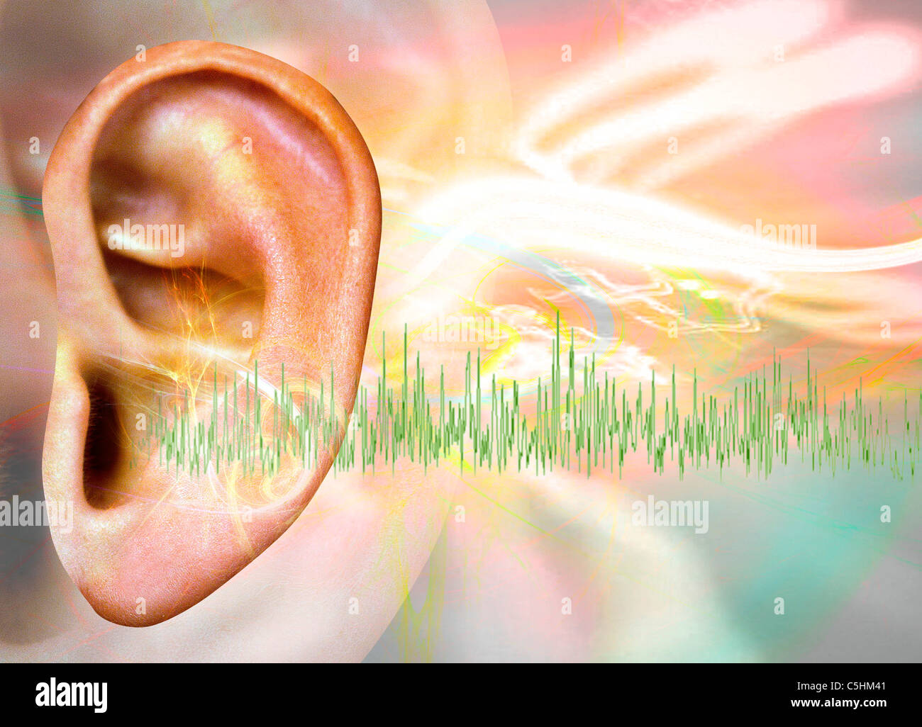 Anatomy Ear Human Outer Ear Medicine Drawing Sciences Stock Photos