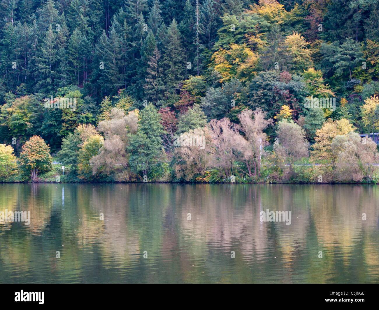 Herbstlich gefaerbte Baeume spiegeln sich in der Mosel, autumn at the riverbank, Traben-Trarbach, Moselle, Mosel - Stock Image