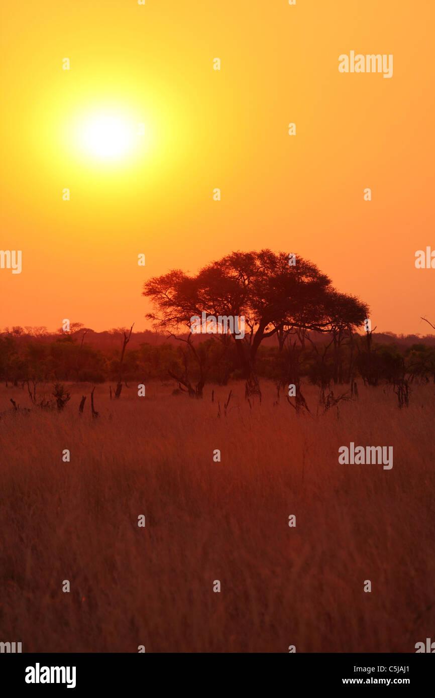 The sun sets in a golden sky Hwange National Park, Zimbabwe. Stock Photo