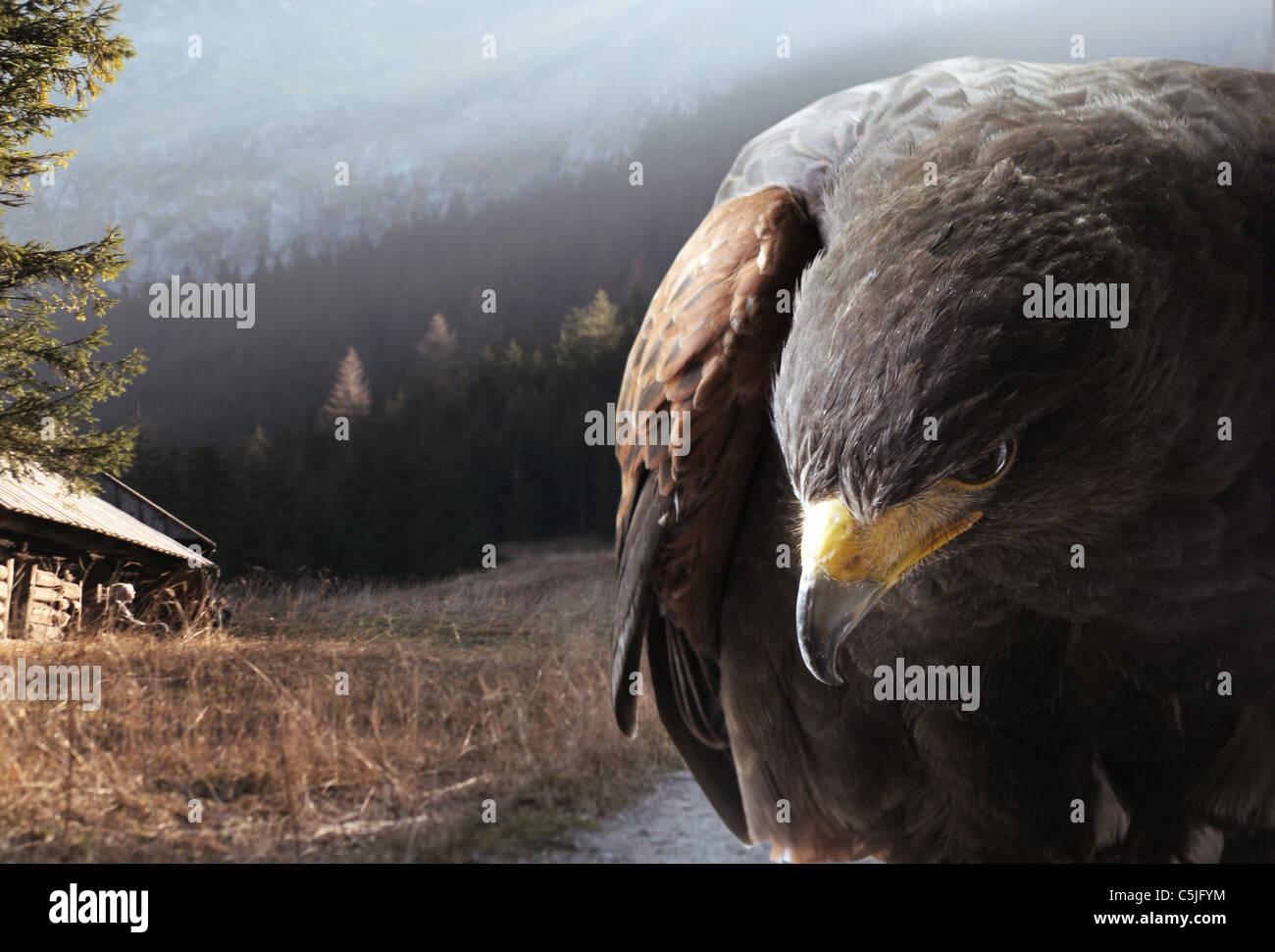Eagle against the mountains - Stock Image