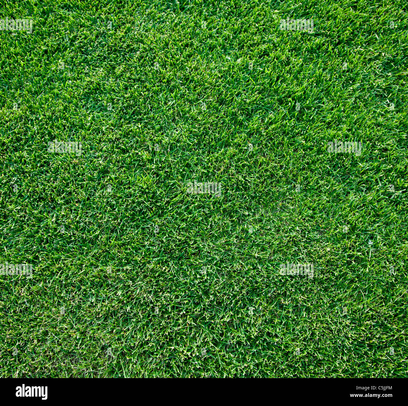 Close up shot of fresh spring geen grass. - Stock Image