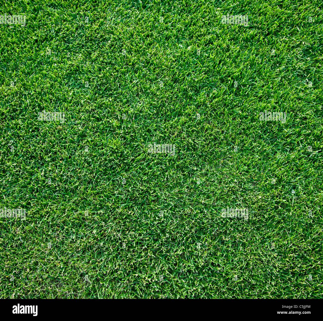Close up shot of fresh spring geen grass. Stock Photo