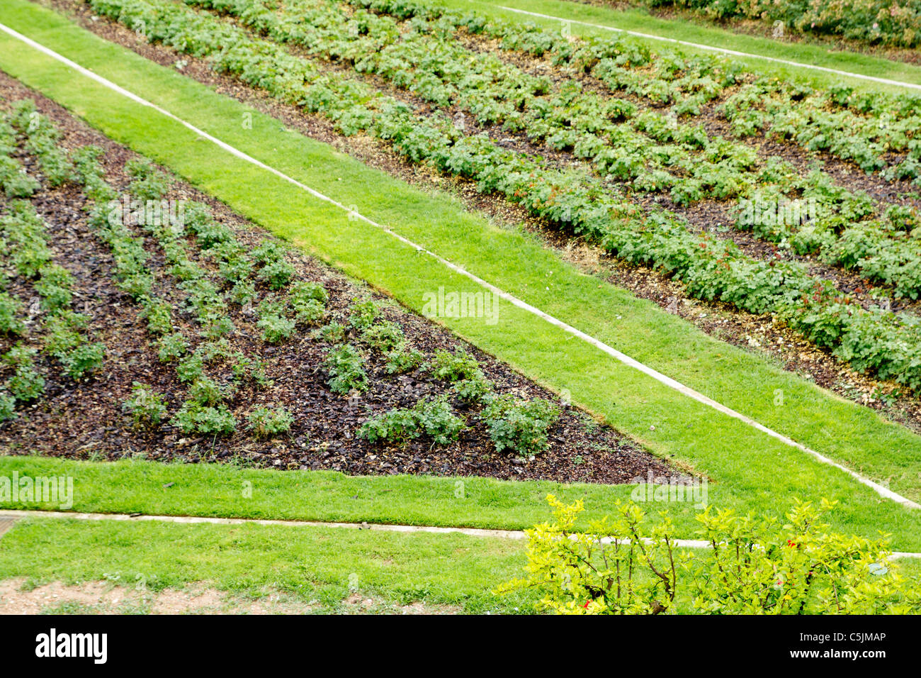 angle shape grass way in green garden from elevated view - Stock Image