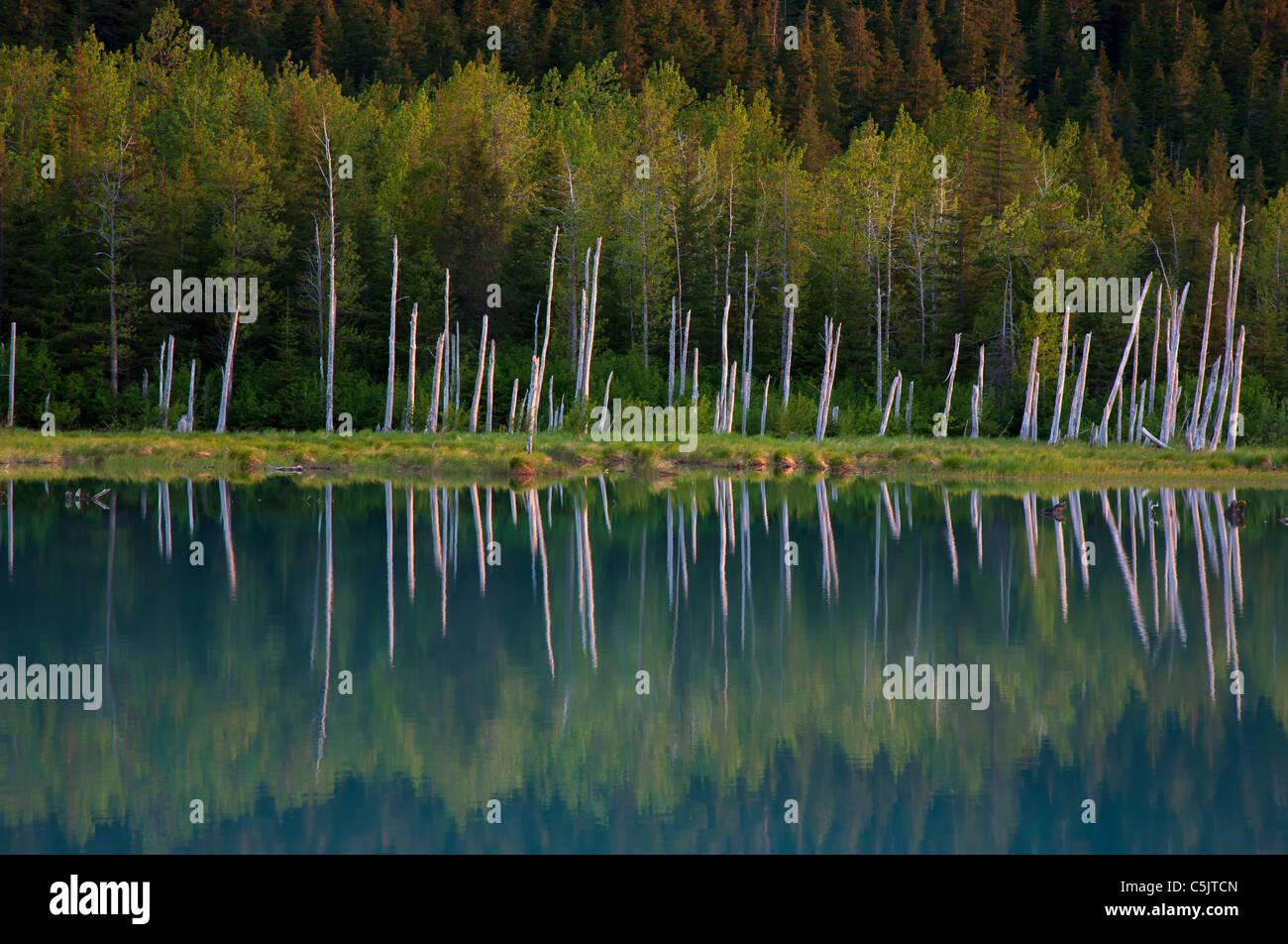 Portage Valley, Chugach National Forest, Alaska. - Stock Image