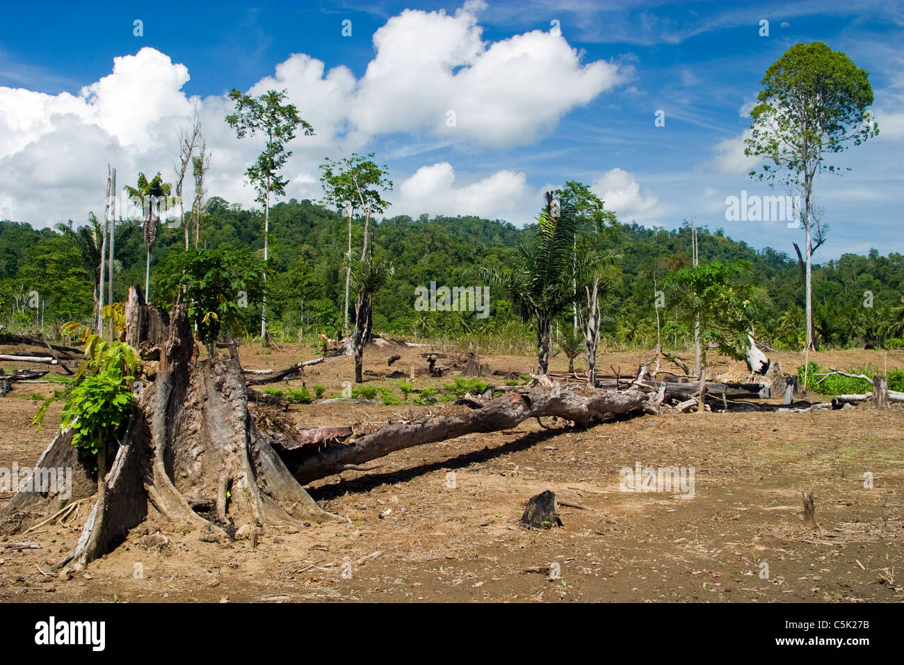 Clear cut forest for agriculture in North Sulawesi Indonesia - Stock Image