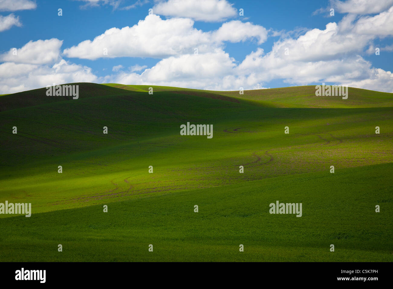 Landscape in the Palouse agricultural area of eastern Washington state, USA - Stock Image