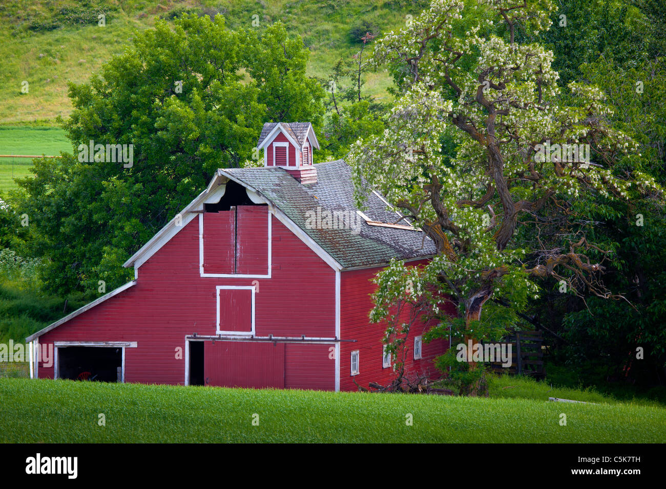 Barn building in the agricultural Palouse area of eastern Washington state - Stock Image
