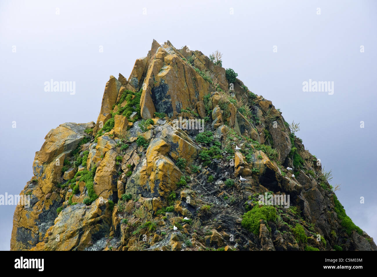 Pinnacle of a rock - with jagged points, vegetation and gulls. UK. - Stock Image