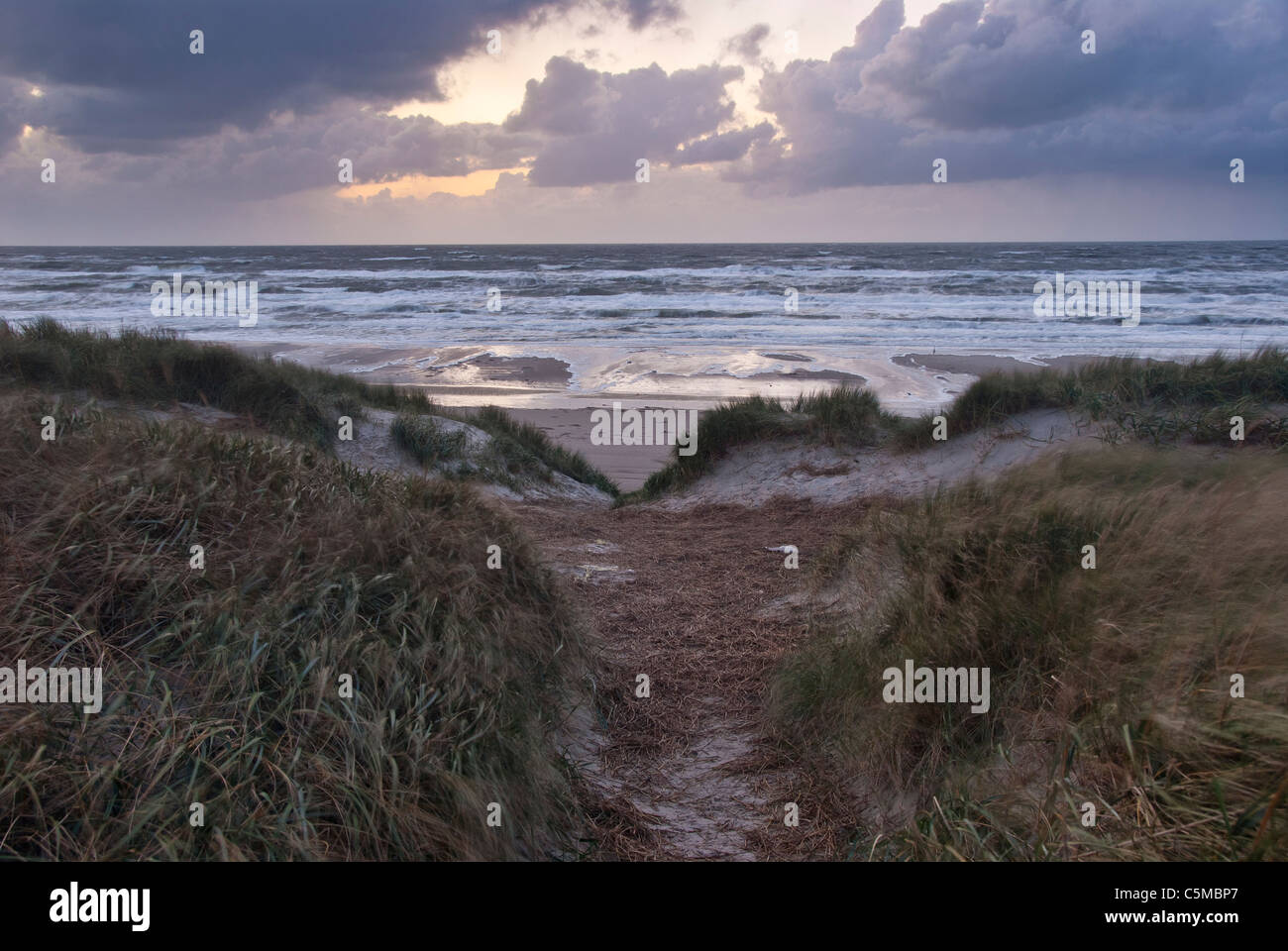 Sunset on North Sea beach with dune in foreground at Vejers beach, Jutland, Denmark - Stock Image